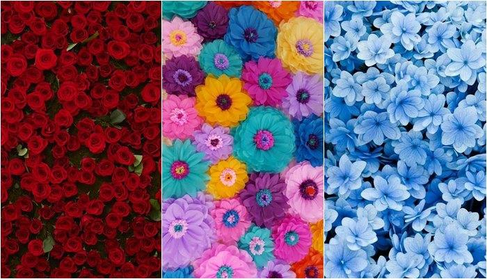 Papéis De Parede De Flores Para Celular Papel De Parede