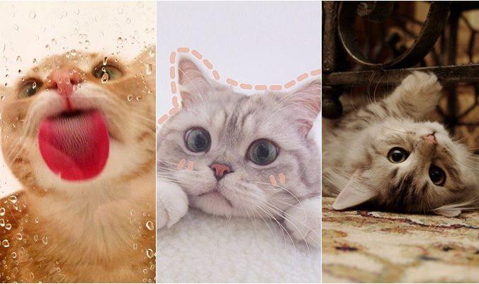 Papéis de parede de gato